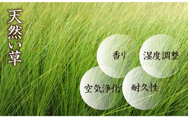 天然のい草