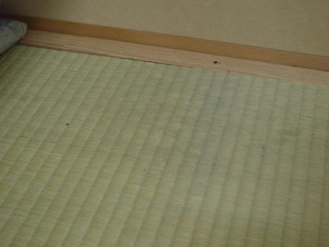 畳ベッドのカビ